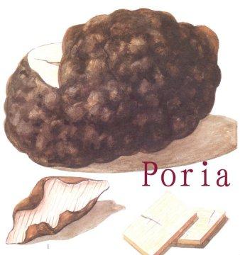 Poria Fuling houba