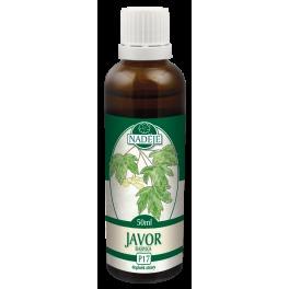 Javor Babyka (P17)